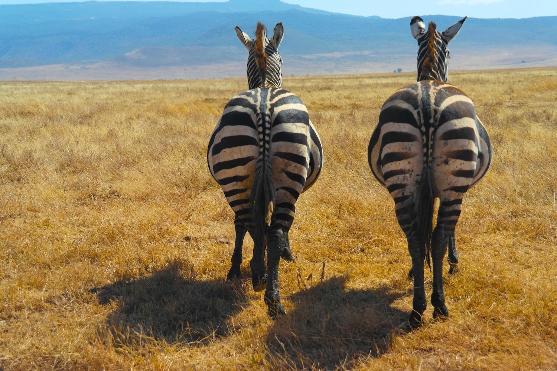 Wonders Of Africa Safari