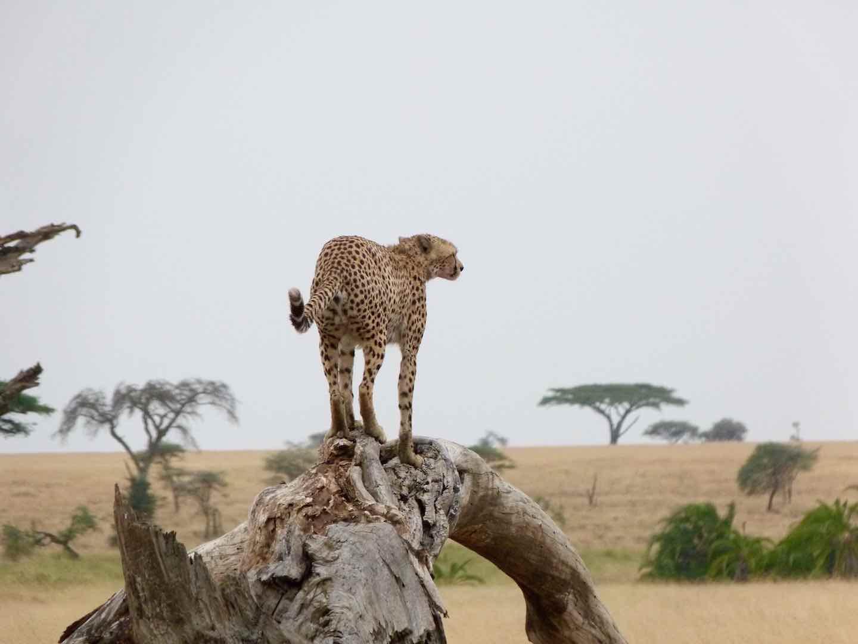 The Supreme Safari